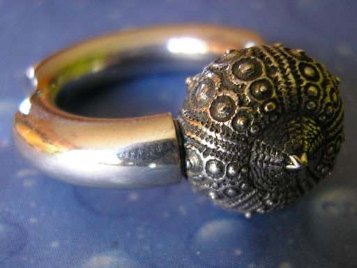Runder Ring Galapagos Seeigel