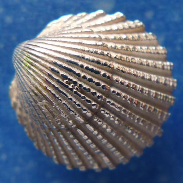 Ozean Schmuck Sommer Ohrring handgearbeitet Ostsee