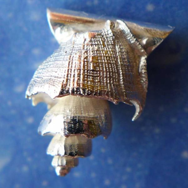 Schneckenanhänger Silber Muskatnuss