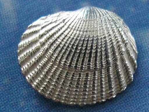 Muschel Ohrschmuck Stecker Punktmond