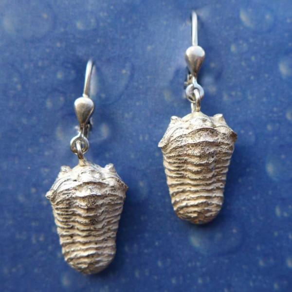 Trilobit Silber Schmuck Ohrringe