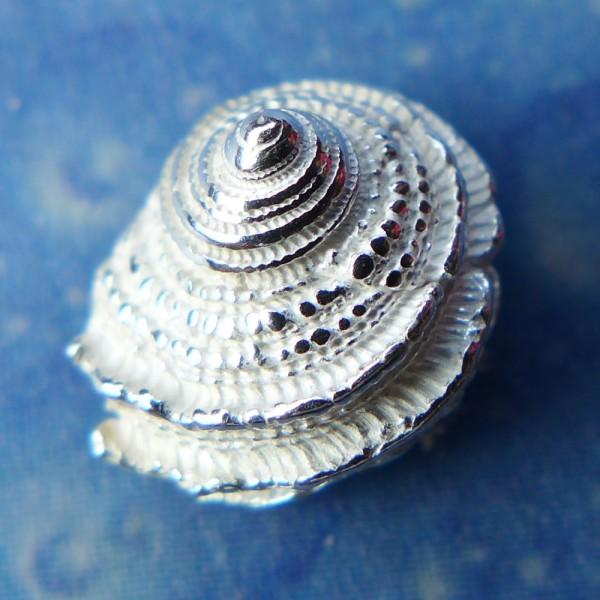 Meeresschnecke Ohrschmuck Silber Ohrstecker