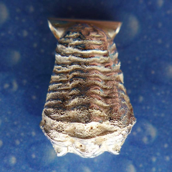 Trilobit Schmuck Anhänger Silber