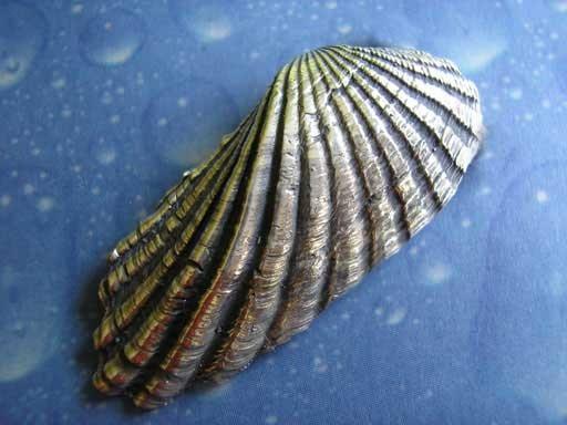 Wellenähnliche Muschel Brosche