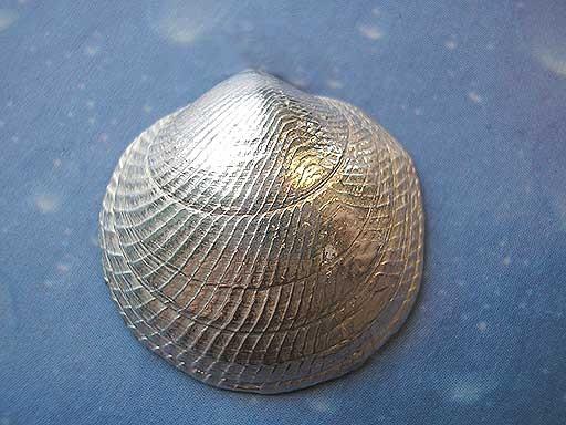 Huttons Mondmuschel medium Brosche