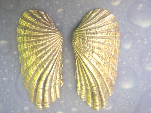 Wellenähnliche Muschel Ohrstecker